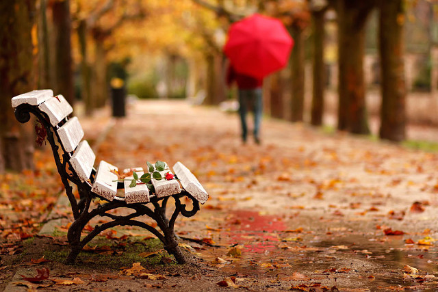 Горячий чай и плед - главные атрибуты осени