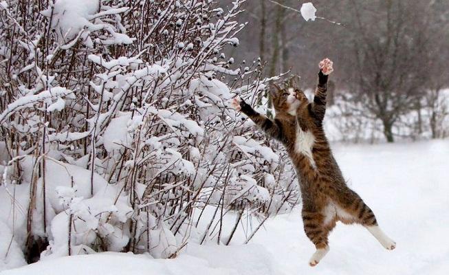 В Украину пришла настоящая зима