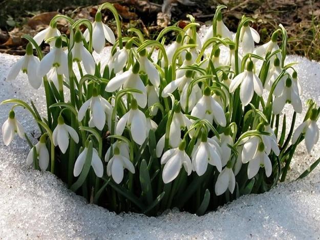 Погода на 8 марта и ближайшие выходные порадует теплом и солнцем