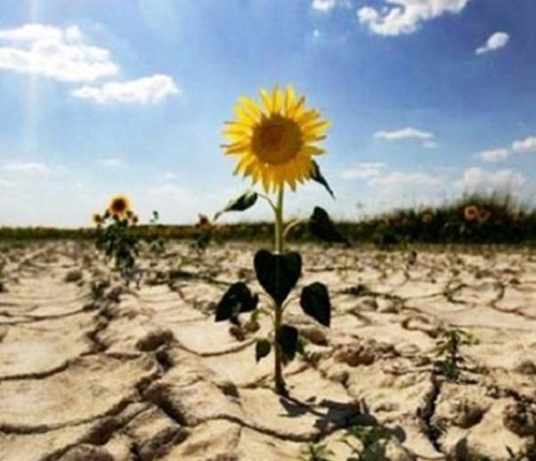 Климатические изменения - юг Украины может стать пустыней