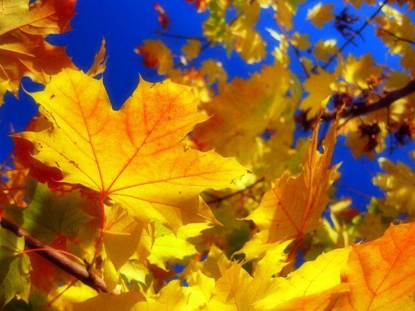 прогноз осень