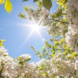 Погода на травневі вихідні в Україні буде теплою і сонячною