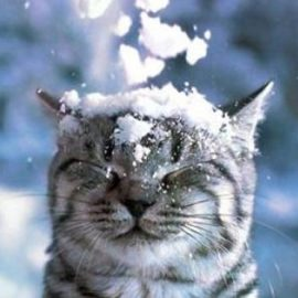 Снег и похолодание: прогноз погоды на неделю