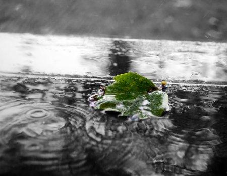 Синоптики прогнозируют дожди