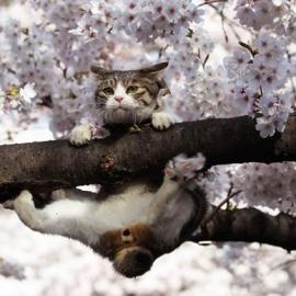 Весна наступит в феврале