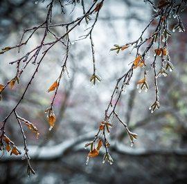 Мокрый снег и дожди: погода на неделю в Украине