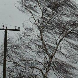 Дождь, снег и сильные порывы ветра: погода на выходные