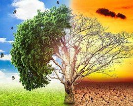 Средняя температура воздуха в Украине растет в три раза быстрее, чем во всем мире