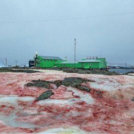 Кровавый снег в Антарктиде