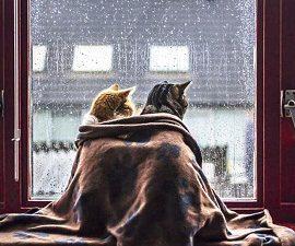 Погодник: Украину накроют дожди