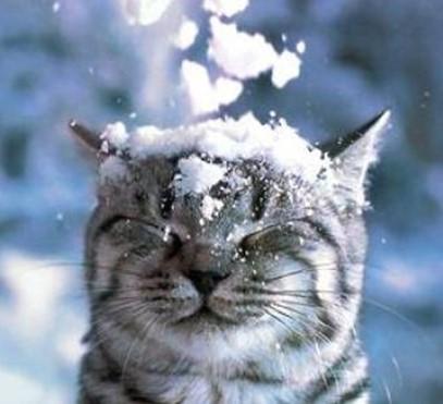 Снега выпадет больше, чем за всю зиму