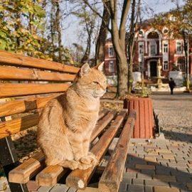 Потепління, нічні морози та дощ: погода в Одесі