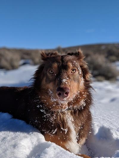 Снегопады