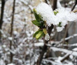 На вихідних в столиці очікується мокрий сніг з дощем