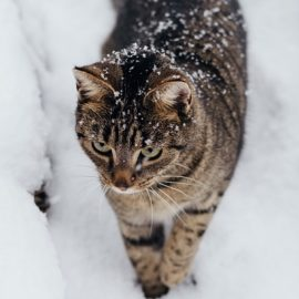 В Украину пришел антициклон со снегом, гололедицей и штормовым ветром