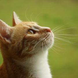 В США назвали найкрасивішу домашню тварину