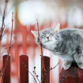 Синоптики розповіли,  чим здивує погода українців в кінці березня