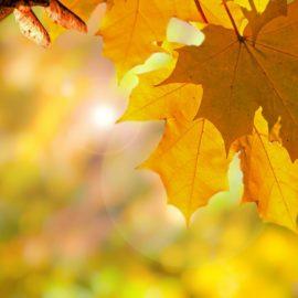 Погода на неделю 27 сентября по 3 октября: Солнечно, но ветрено