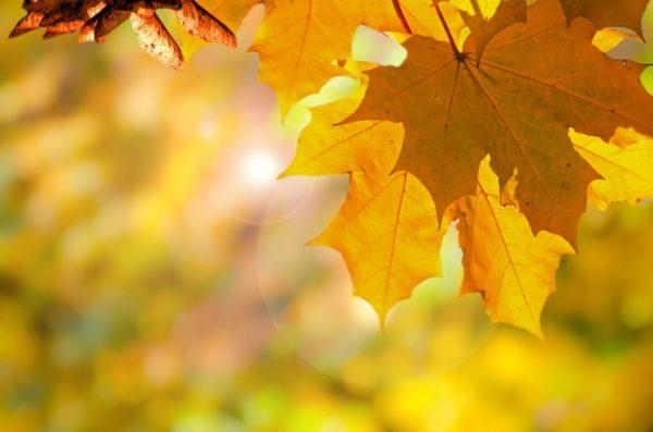 Погода на неделю 27 сентября по 3 октября