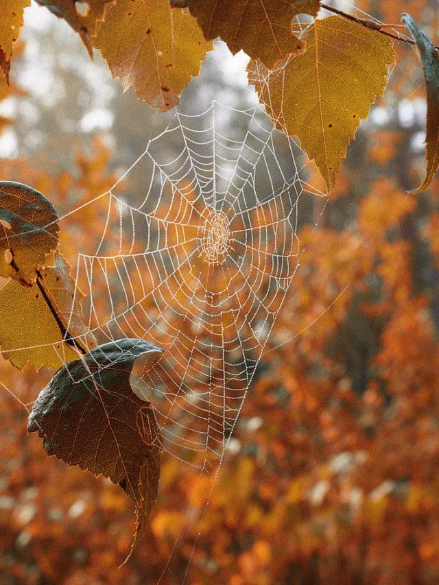 Погода на пятницу 8 октября в Украине – сильные ветра