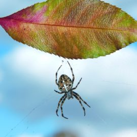 Природа осенью: листопад, бабье лето, откуда в воздухе паутина