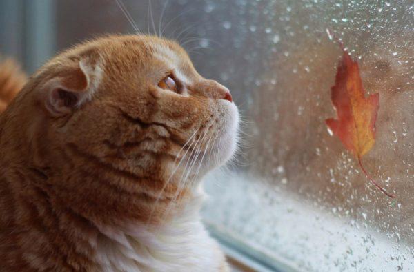 Что принесет октябрь: солнце или дожди