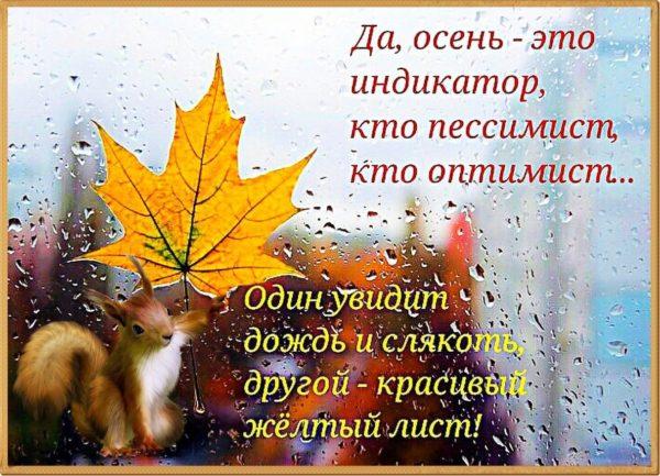 Погода на выходные  2 и 3 октября: Гуляйте и дышите воздухом – погода прекрасная