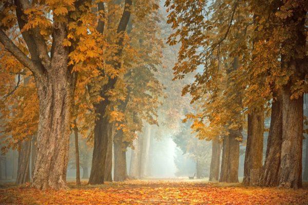 Погода на пятницу 15 октября: Середина осени