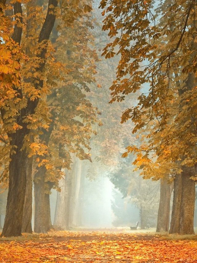 Погода на п'ятницю 15 жовтня: Середина осені