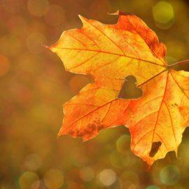 Погода на 23 и 24 октября: Берегите здоровье