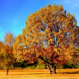 Погода на неделю с 18 по 24 октября: На солнце неспокойно
