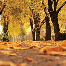 Погода на пятницу 22 октября: Последние теплые дни